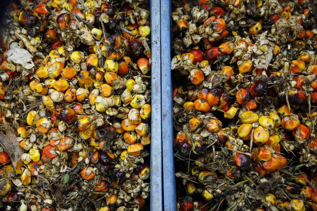 China Imported More Palm Oil Than it Has in Six Years