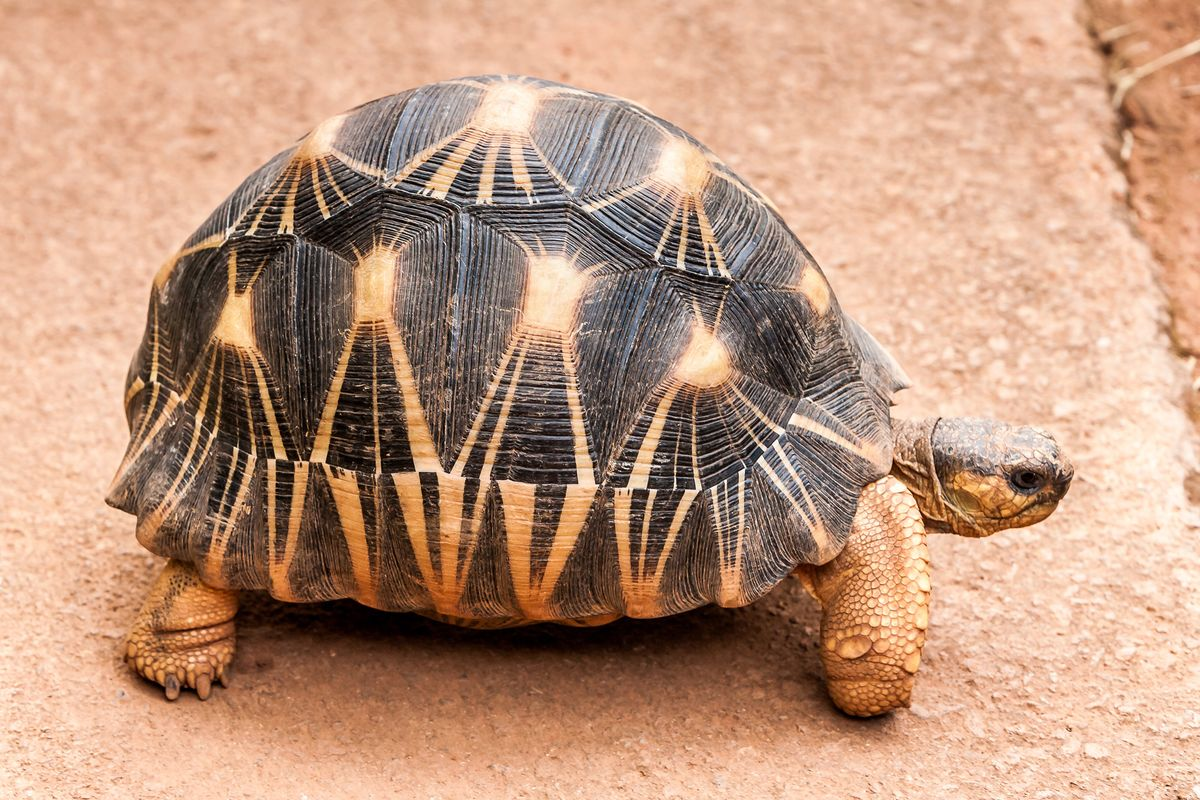 Over 10,000 Endangered Tortoises Rescued From Traffickers