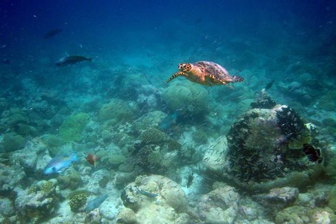 Diving the Chagos-Diego Garcia Marine Protected Area
