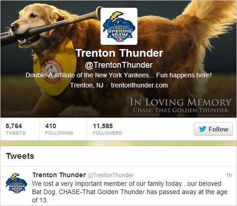 Trenton Thunder's Golden Retriever Bat Dog Chase Dies at Age 13