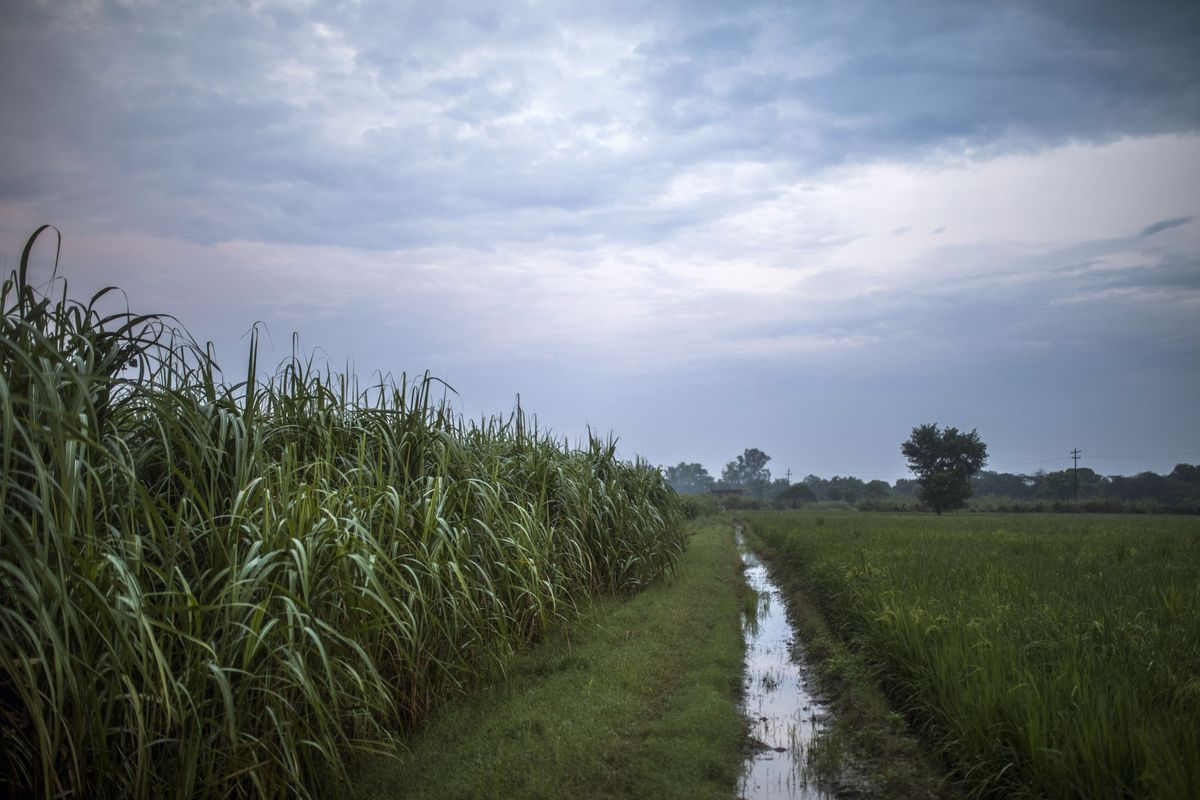 Bountiful Monsoon Rains Seen Mitigating India's Economic Woes