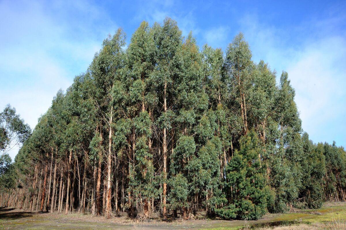 Australia in Tree-Planting Binge to Help Meet Climate Targets