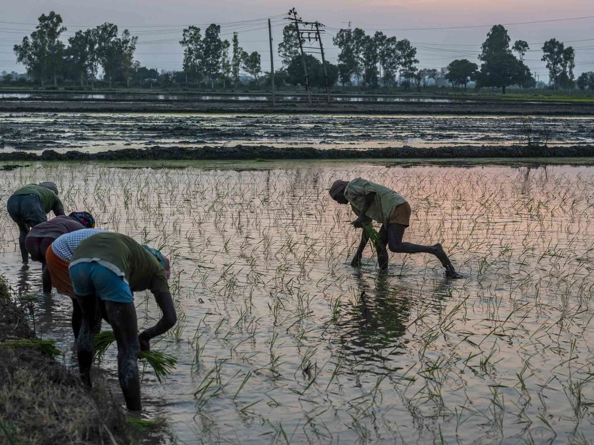bloomberg.com - Loni Prinsloo - Prosus Bets on AI to Help Reshape India's $350 Billion Farm Industry