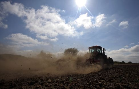 Wheat Rallying 20% as Parched Fields Wilt