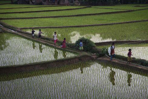 Iran Curbs Drive Rice Exporter to Africa Market