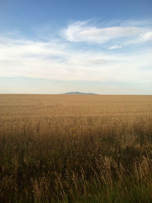 The landscape flattens and wheat replaces rock as you head east from Livingston into the plains.