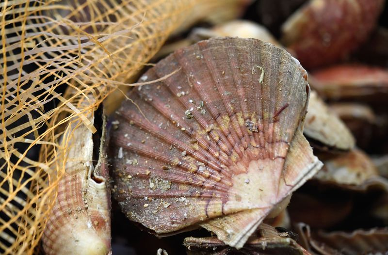 FRANCE-GASTRONOMY-SEAFOOD