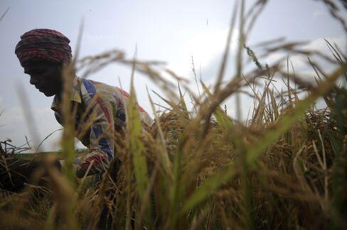 Bangladeshi farmers
