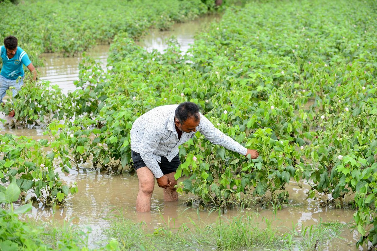 India's Best Monsoon in 25 Years Paves Way for Plentiful Crops