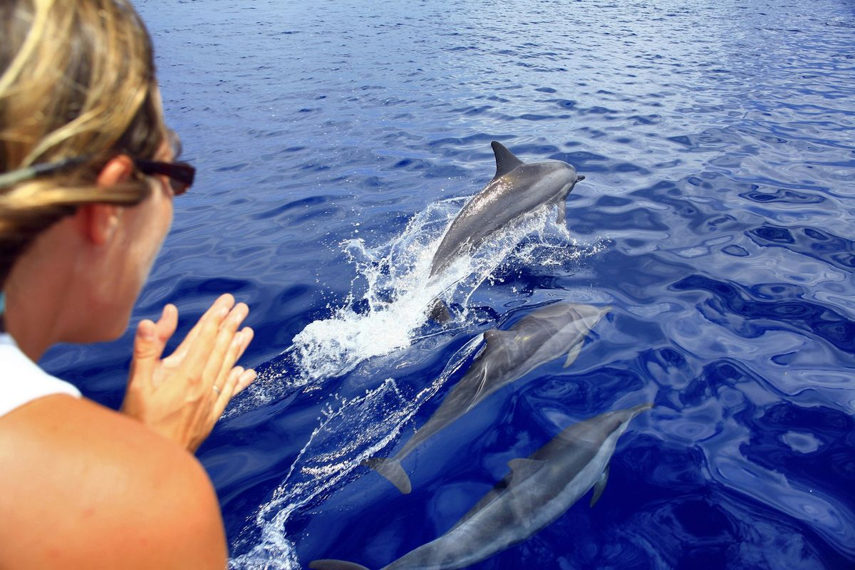 U.S. Close to Banning Swimming With Hawaiian Spinner Dolphins