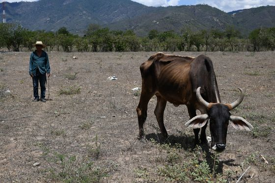 Climate Change Has Central Americans Fleeing to the U.S.