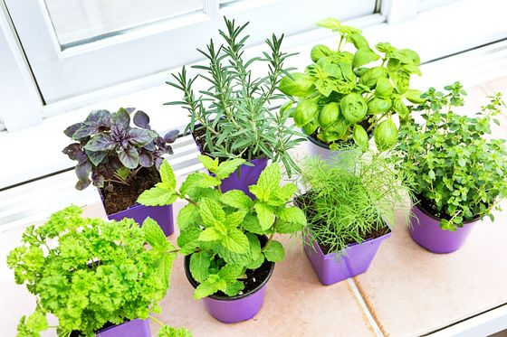 Now's theTime to Branch Out Into More InterestingIndoor Plants