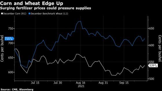 Grains Rebound With Fertilizer Price Surge Threatening Supply