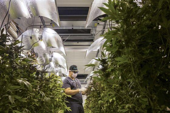 Can Crypto, Cannabis, and Nicolas CageBoost Puerto Rico's Economy?