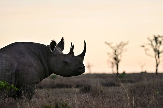 World's First Wildlife Bond to Track Rhino Numbers in Africa