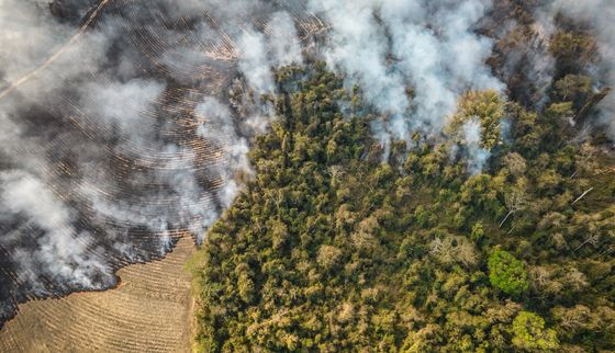 Fires Die Down in the Amazon, But Rage Elsewhere in Brazil