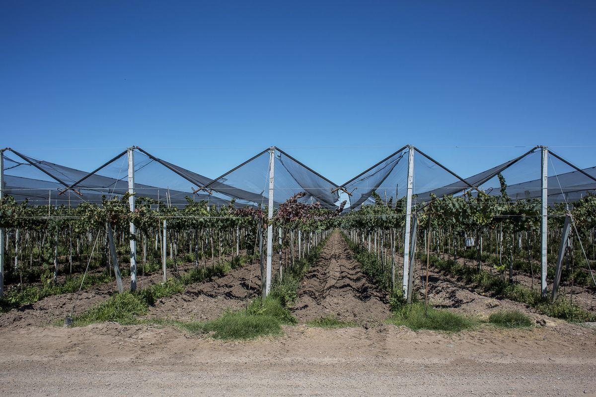Argentina's Famed Vineyards Buck Backdrop of Economic Gloom
