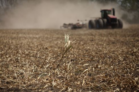 Global Food Reserves Falling as Drought Wilts Crops
