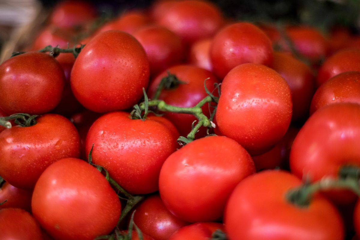 Image Italy's Tomato Harvest Threatened by Can Shortages