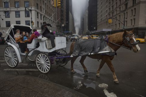 A carriage horse and driver in New York