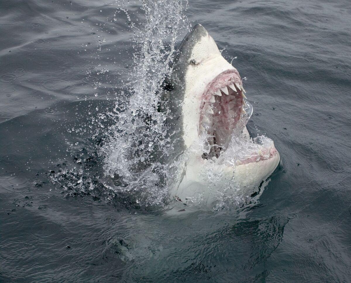 Netflix Signs Spielberg. Disney Hears 'Jaws' Music.