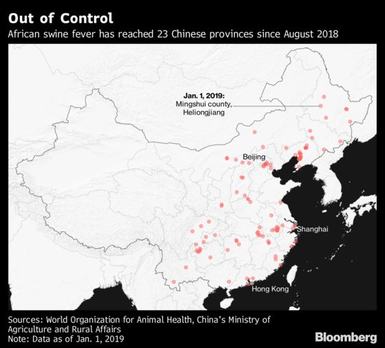 The Year of the Pig Will Be a Pig of a Year for China's Hogs