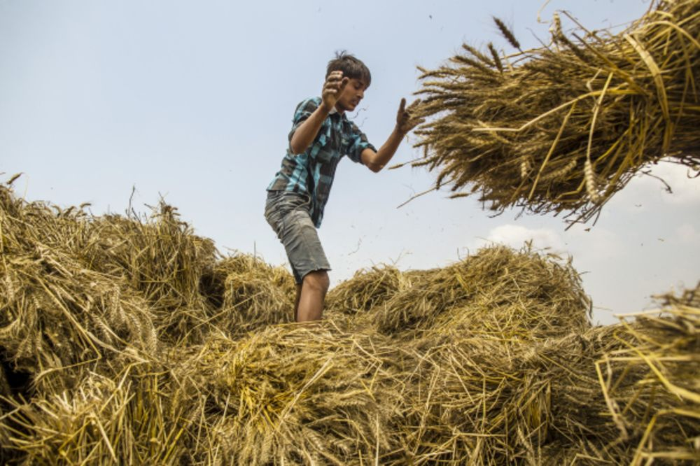India Raises Import Tax on Wheat to 40% to Support Local