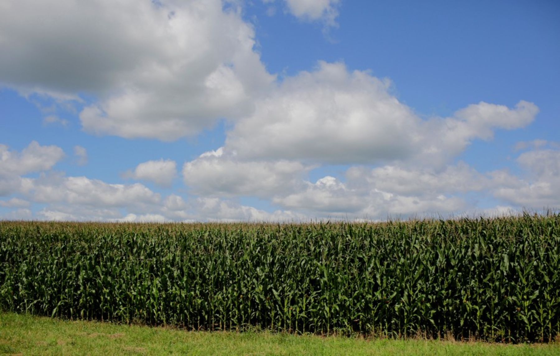 """Corn Sweat"" Compounds Humidity in Sweltering Midwest States"