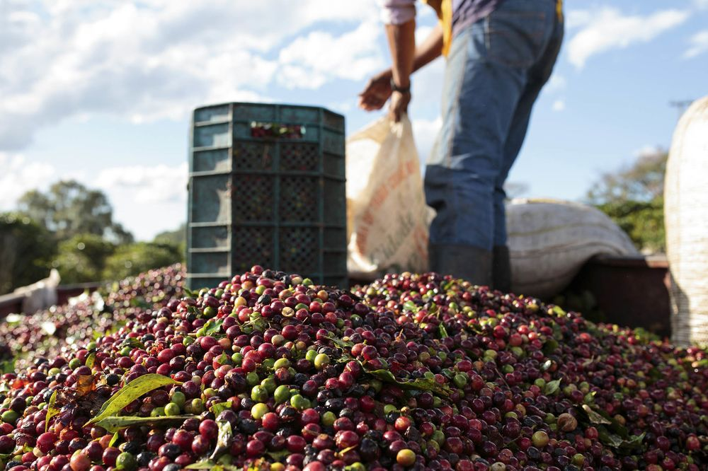 Espresso King Undercut As Brazil Currency Rout Spurs Bean Export