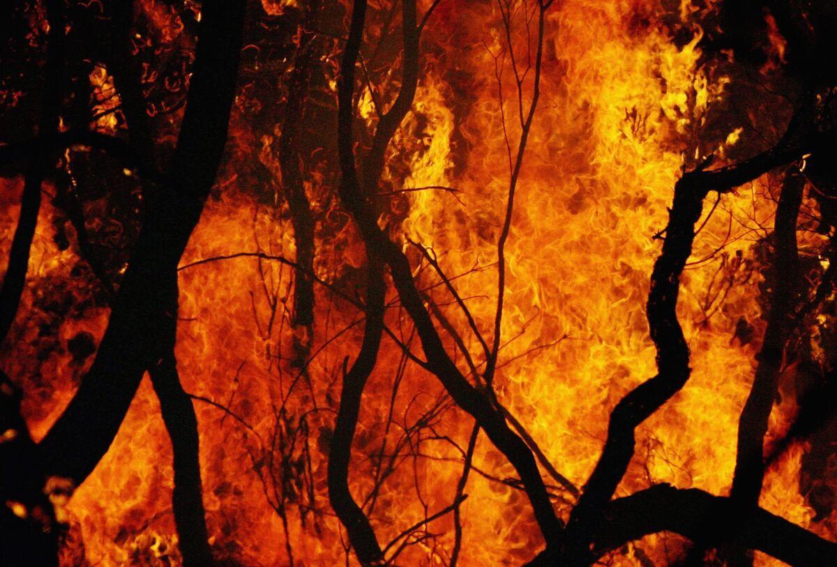Bushfires Reap What Australia's Carbon Exports Have Sown thumbnail