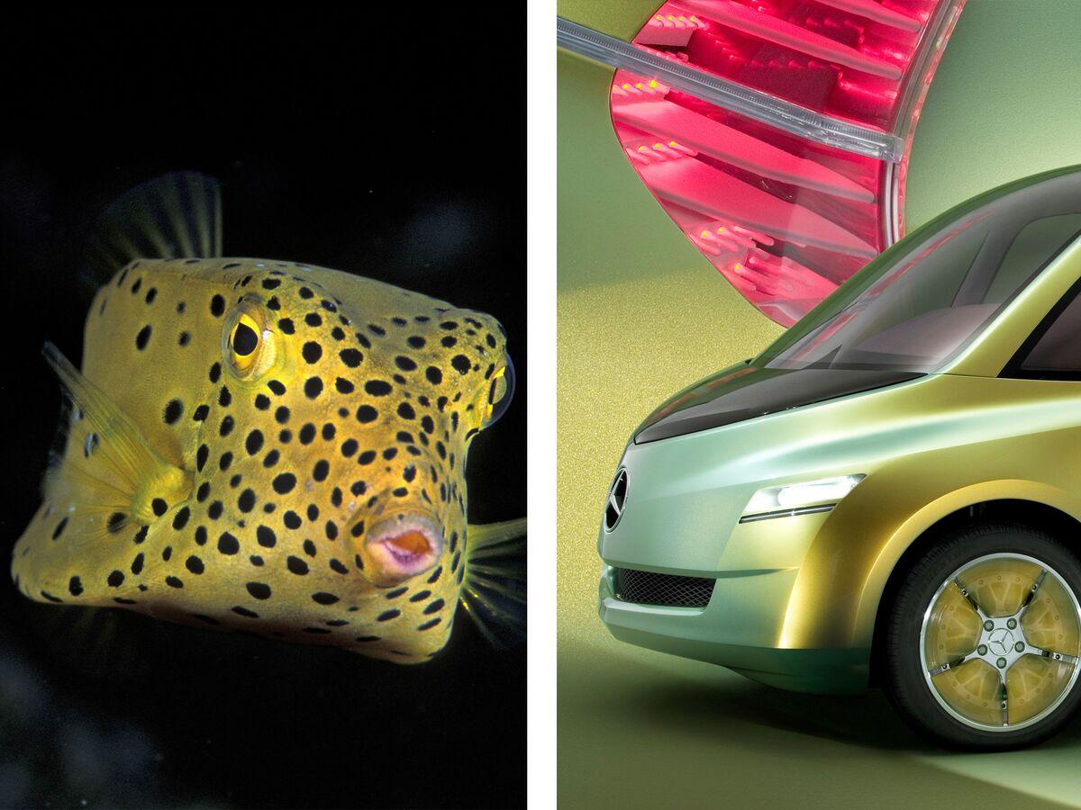 Experimental Fish Car
