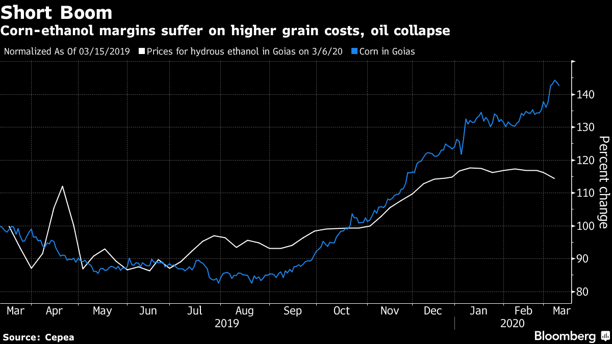 Corn-ethanol margins suffer on higher grain costs, oil collapse