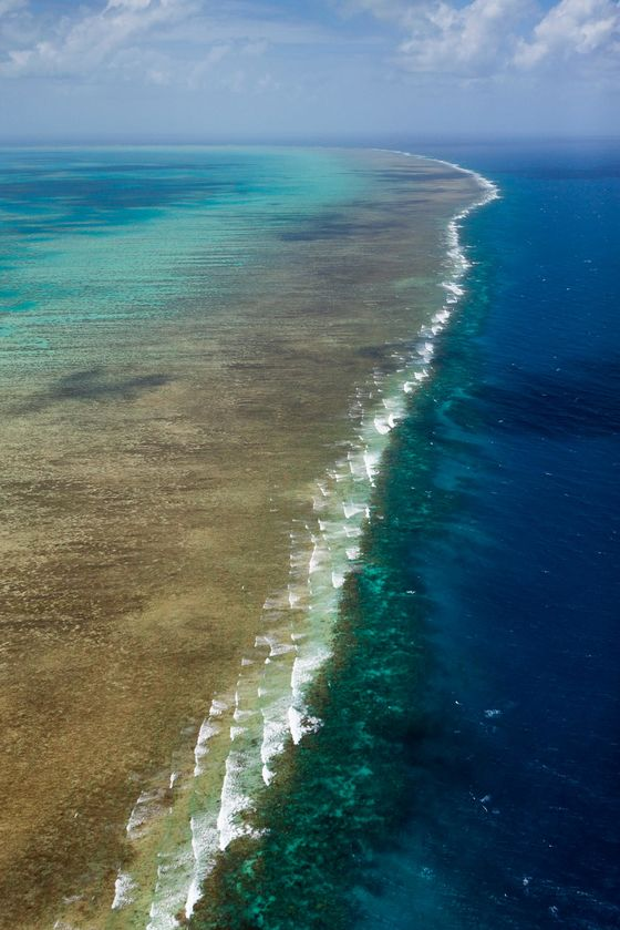 Australia Wrestles With Saving the Great Barrier Reef