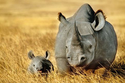 Can a 'Paperless Office' App Save Africa's Rhinos From Extinction?