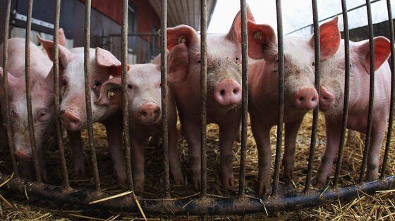 U.K. in Deal to Restart Fertilizer Output, Easing CO2 Crunch