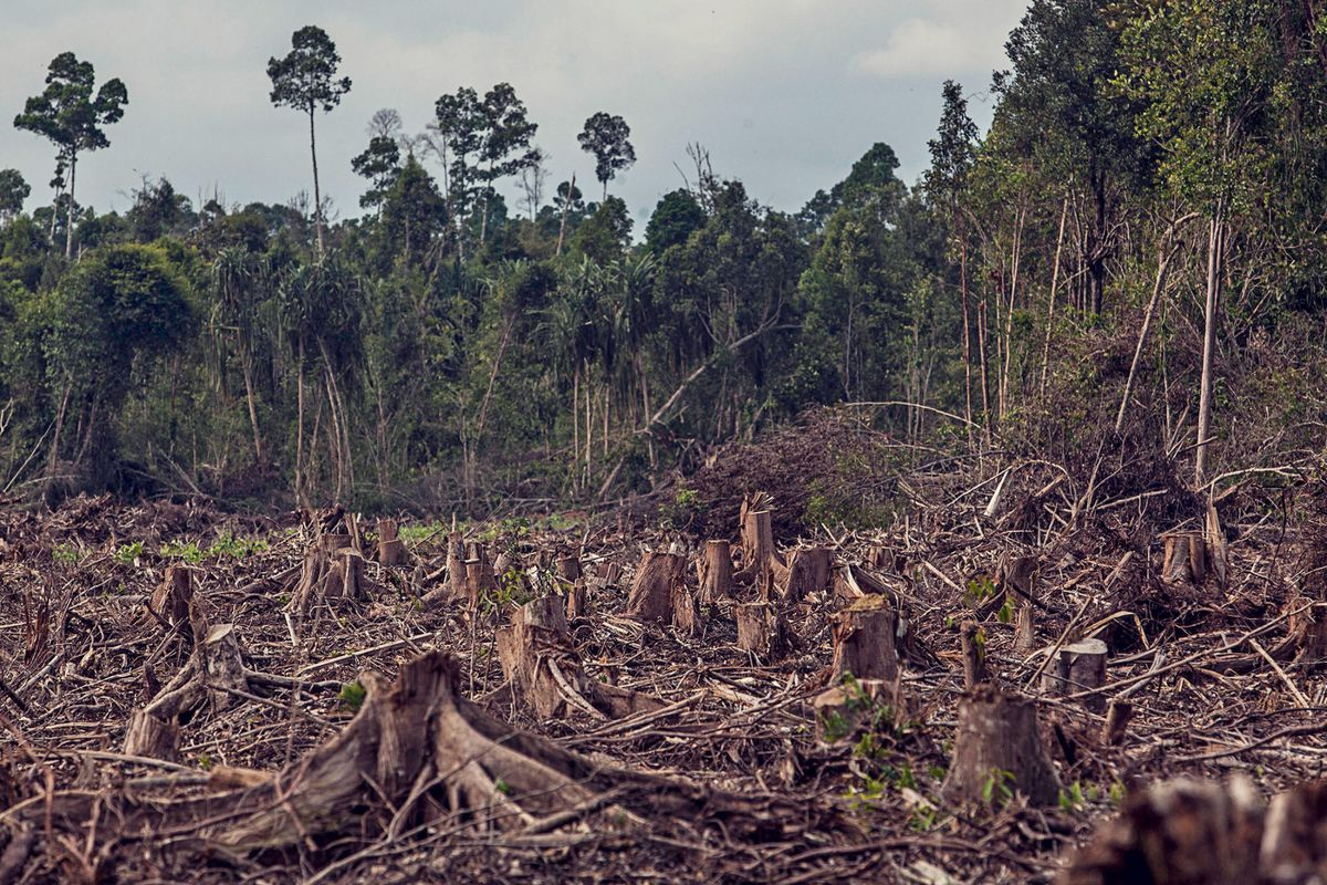 Global Warming Is Slowing the Growth of Plant Life on Earth