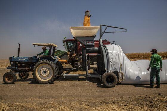 Fertilizer Price Shock Threatens Crop of World's Key Corn Supplier