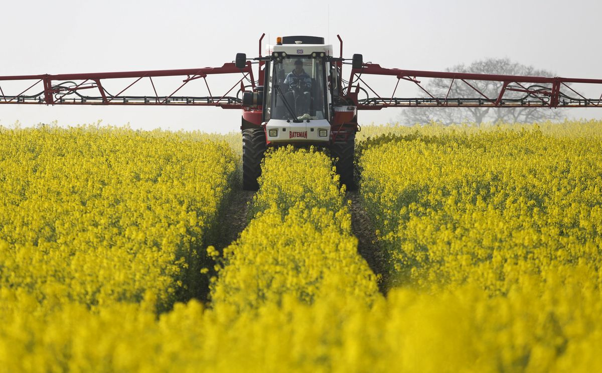 Canada Unfazed by Oilseed Crossfire With Canola Set for Record