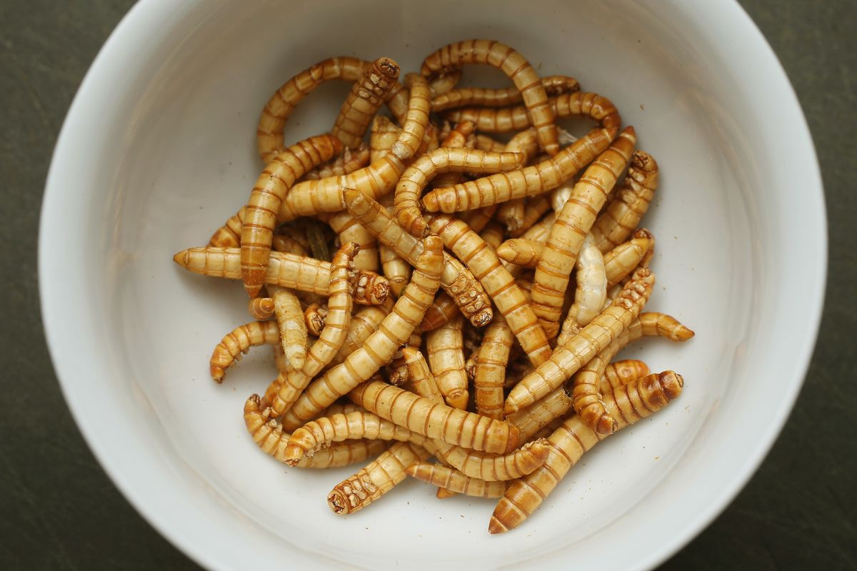 EU Approves Sale of Mealworm for Human Consumption thumbnail