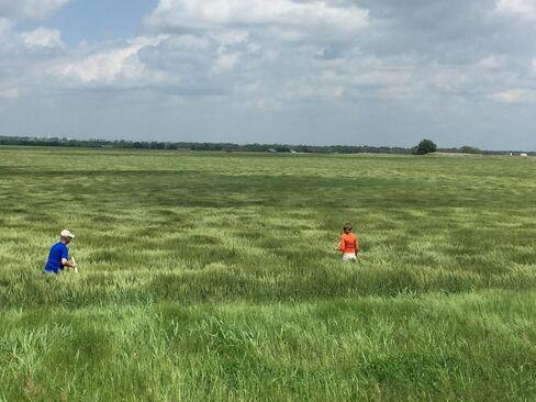 Surveying Oklahoma Wheat Fields