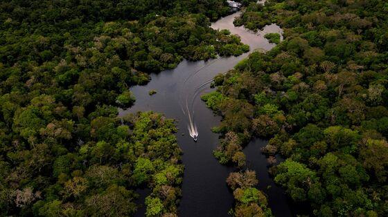 Amazon Bears Brunt of Gold-Prospecting Surge, Brazil Study Shows