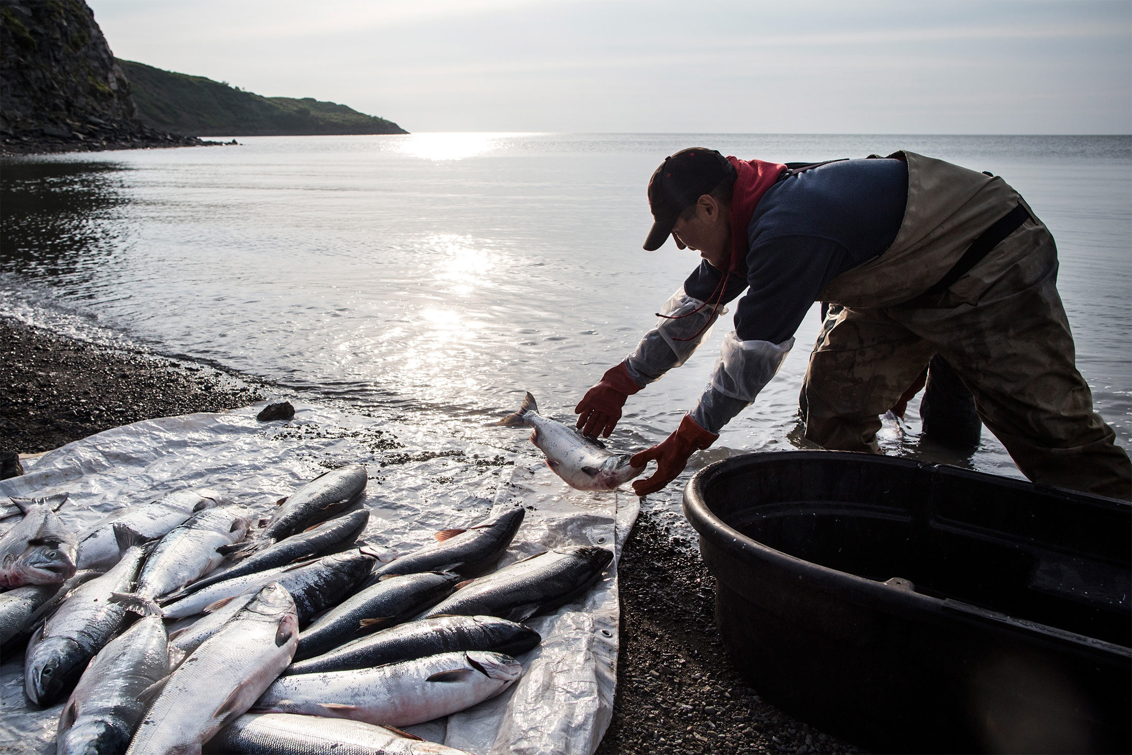 A fisherman washes freshly caught salmon in Newtok, Alaska.