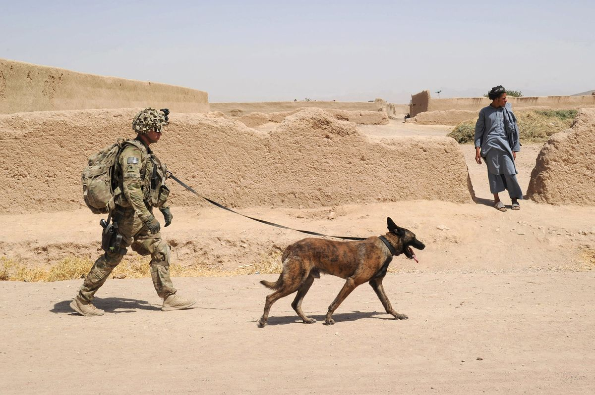 Military Dogs Are Becoming an Increasingly Precious Weapon - Bloomberg
