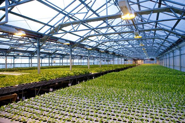 Urban Farm Gotham Greens Gives Us Brooklyn Lettuce Bloomberg