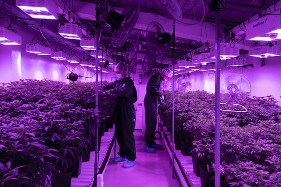 Everybody Here Wants to Be a Cannabis Farmer