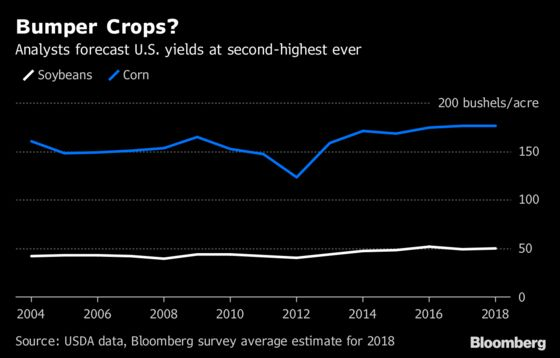 Near-Record U.S. Crops? Here's What to Watch in WASDE Data