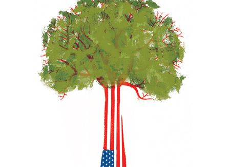 Book Review: 'American Canopy,' by Eric Rutkow