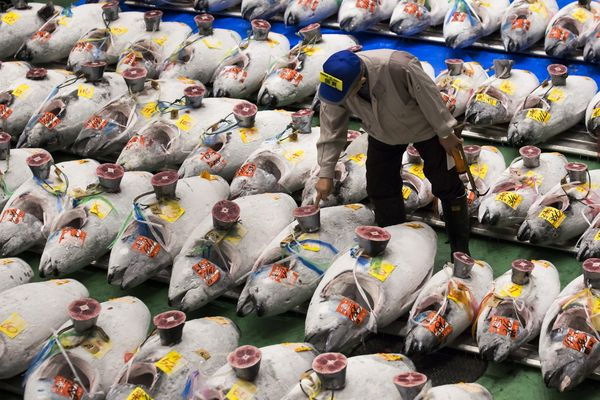Toyosu Market Begins Operations After Tokyo Relocates World's Oldest Fish Market