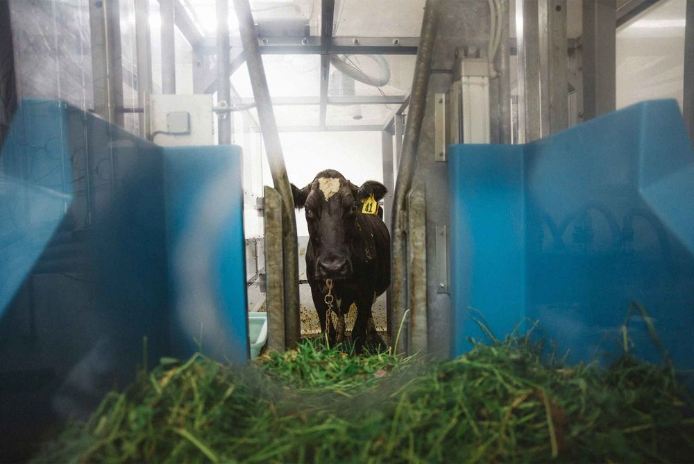 Cutting Down on Cow Burps to Ease Climate Change - Bloomberg