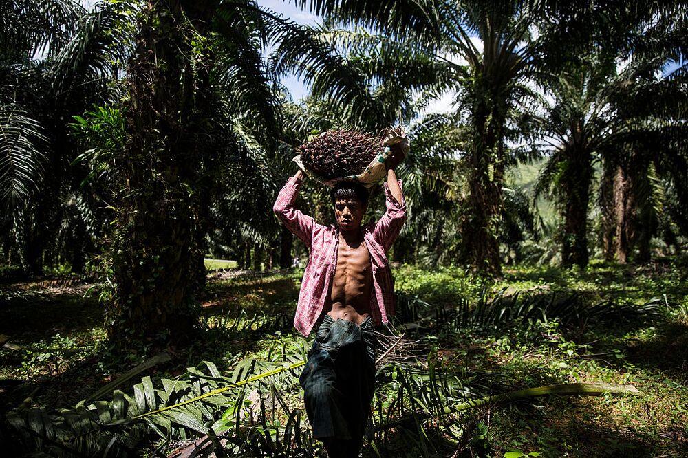The EU ban would punish Malaysian workers.
